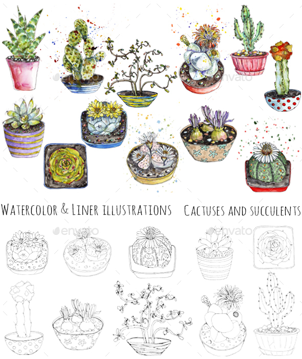 Cactuses Watercolor and Pen Illustrations