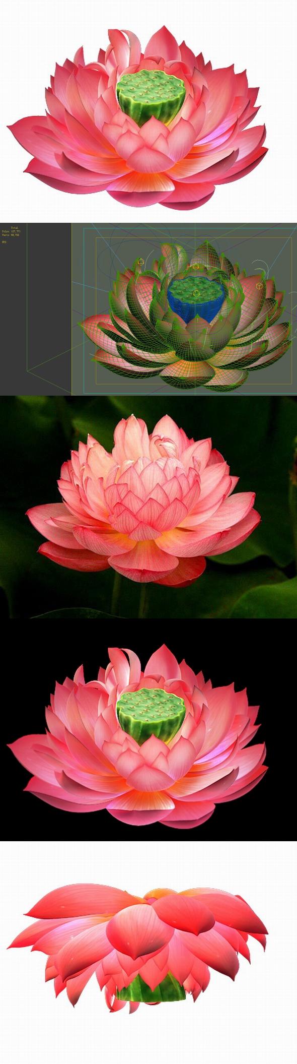 Game Model - Lotus - 3DOcean Item for Sale