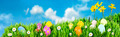 Easter Egg nests - PhotoDune Item for Sale
