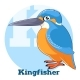 ABC Cartoon Kingfisher