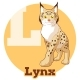 ABC Cartoon Lynx