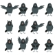 Flat Icons of Ravens Set