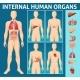 Cartoon Human Body Internal Parts Concept