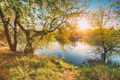Sun Shining Through Branch And Foliage Of Tree Near River Or Lak