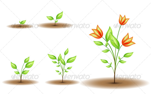 GraphicRiver Growing flower 74885