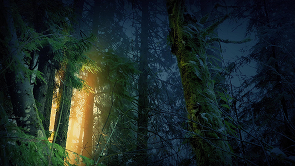 Magical Forest With Golden Light Glowing Through Trees By