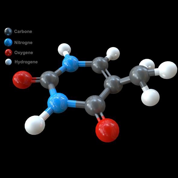 DNA - Thymine Nucleobase model - 3DOcean Item for Sale