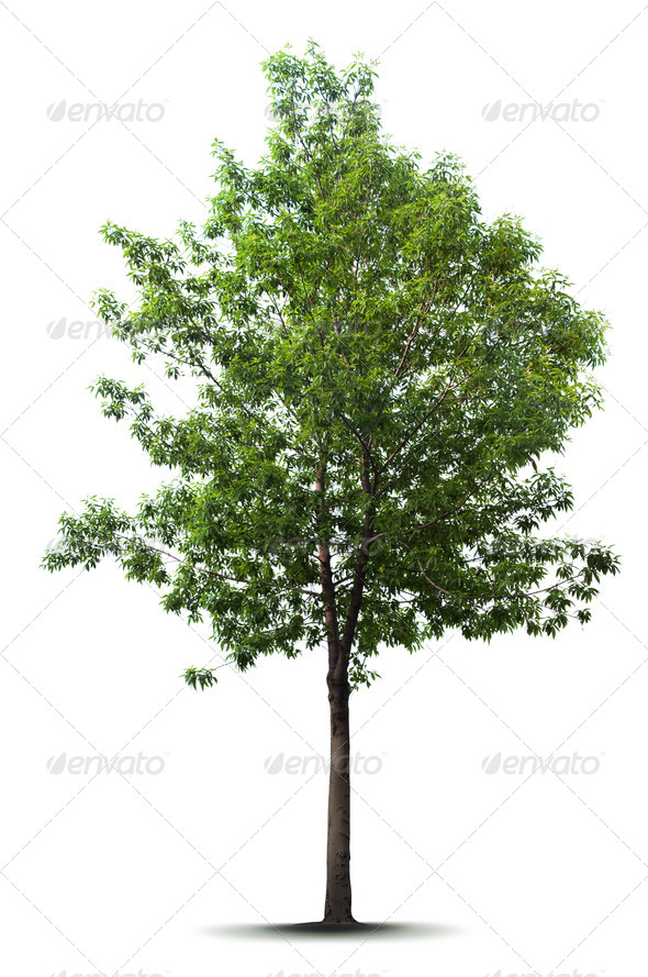 PhotoDune Tree 1954494