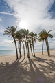 Palm trees on sandy beach and blue sky