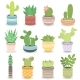 Cactus Nature Green Succulent Tropical Plant