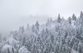 mountain forest in dense winter fog