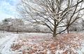 path by beech tree in winter frost