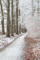 biking path in frosted forest