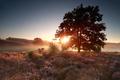 summer sunrise over flowering heather hills