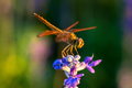 Dragonfly sitting on top of purple flower