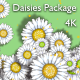 Daisies Package 4K