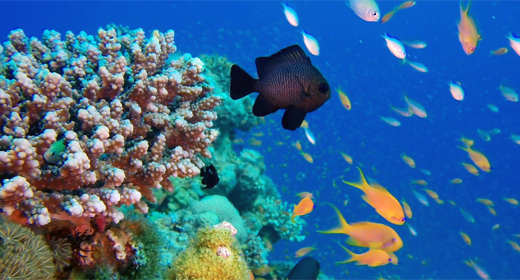 Colorful Underwater Tropical Fishes