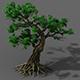 Plant - green leaf tree 01