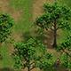 Plant - Tree 16