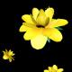 Rain of Yellow Flowers
