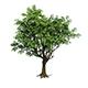 Plant - Tree 18