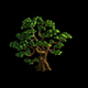 Plant - Pine 05