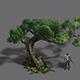 Plant - Pine 16