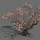 Plant - Peach Tree 18