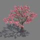 Plant - Peach 13