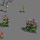 Plant - flowers