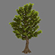 Plant - Ginkgo Tree 02
