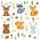 Funny Forest Animals and Floral Elements Isolate