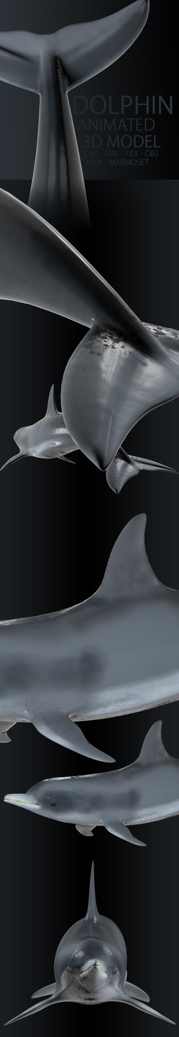 3DOcean Animated Dolphin 19892361
