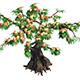 Plant - peach tree 032