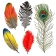 Hand Drawn Set of Various Colorful Bird Feathers