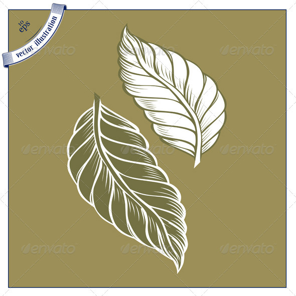Cacao Leaves Icon