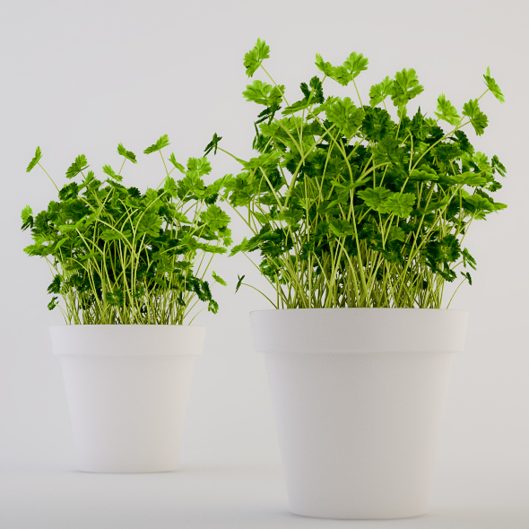 Parsley in a Pot - 3DOcean Item for Sale