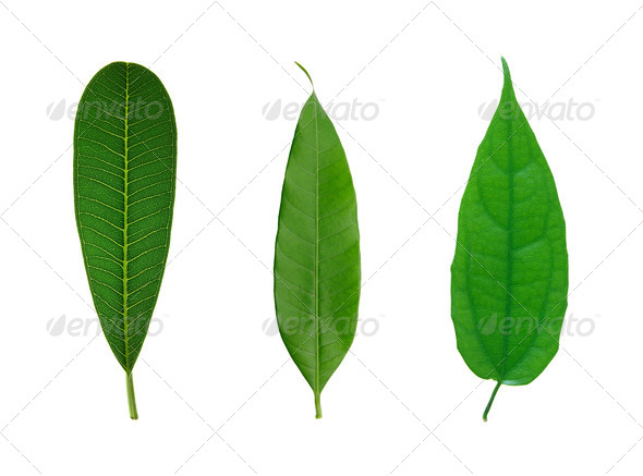 set of green leaf isolated on a white - Stock Photo - Images