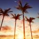 Sunrise Under Palms