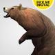 Bear Standing Up 03