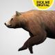 Bear Running Loop 01