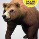 Bear Running Loop 02