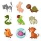 Pets Domestic Animals Vector Flat Icons