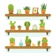 Cactuses in Pots Stand on the Shelves.