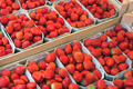 Strawberries in boxes for sale