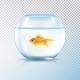 Golden Fish Bowl Realistic Transparent