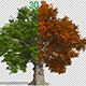 Oak Tree Animation