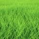 Fast Low Flight Over Grass