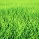 Fast Low Flight Over Grass, DOF, Loop