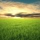 Flight Over Grass, Sunset, Cloudscape